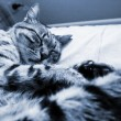 Striped cat fast asleep (monochrome ) — Stock Photo