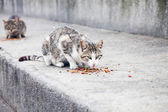 Wild alley cat eating — Stock Photo