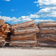 Stacks of planks at timber-mill — Stock Photo