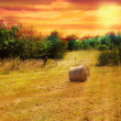 Hayfield at sunset — Stock Photo