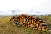 Harvested logs for firewood on a hill — Stock Photo