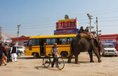 Elephant and the indian on the bus stop — Stock Photo