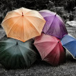 Five umbrellas on the grass. Black and white — Foto de Stock