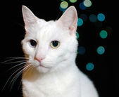 White cat on bokeh lights background — Stock Photo