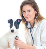 Female veterinarian examining jack russell terrier with stethoscope. Isolated on white — Stock Photo
