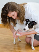Woman cutting her small dog claws — Stock Photo