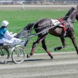 Harness racing. Racing horses harnessed to lightweight strollers. - Stock Photo