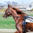 Harness racing. Racing horse in motion — Stock Photo #25657227