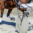 Foto Stock: Harness racing. Racing horse harnessed to lightweight strollers.