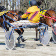 Harness racing. Racing horses harnessed to lightweight strollers. — 图库照片