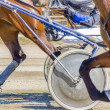Harness racing. Racing horses harnessed to lightweight strollers. — Stock Photo