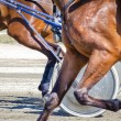 Harness racing. Racing horses harnessed to lightweight strollers. — Lizenzfreies Foto