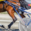 Harness racing. Racing horse harnessed to lightweight strollers. — Stock Photo #25657261