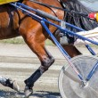 Harness racing. Racing horse harnessed to lightweight strollers. — Stock Photo