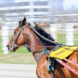Harness racing. Racing horse in motion — Stock Photo