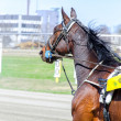 Harness racing. Racing horse in motion — Stock Photo #25657301