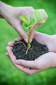 Hands putting flower into soil in female hands — Stock Photo
