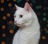 White cat over colorful bokeh — Stock Photo