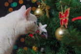 Chat blanc renifle les décorations de Noël sur l'arbre — Photo
