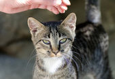 Female hand stroking head of a cat outdoors. — Stock Photo