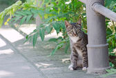 Cute street kitten outdoors. — Stock Photo