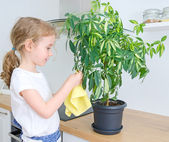 Little girl wipes dust from the flower leaves. — Stock Photo