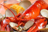 Boiled lobster dinner with clams and corn — Stock Photo