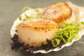 Sea Scallop with greens in a scallop shell — Stock Photo