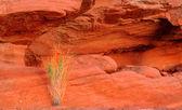 Plante verte dans la roche rouge dans la vallée de feu — Photo