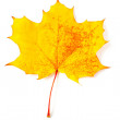 Mottled yellow autumn leaf — Stock Photo