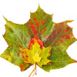 Stock Photo: Bunch of colorful autumn leaves