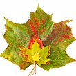 Bunch of colorful autumn leaves — Stock Photo
