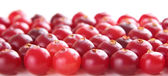 Ripe red cranberry — Stock Photo