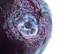 Blueberry closeup (macro) — Stock Photo