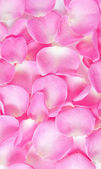 Background of bright pink rose petals — Stock Photo