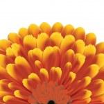 цветок — Cтоковый вектор