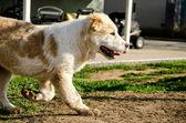Perro corre — Foto de Stock