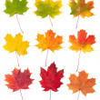 Maple leaves — Stock Photo #13666196