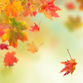Autumn background — Stockfoto