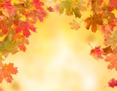 Autumn background — 图库照片
