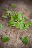 Mint herb — Stock Photo