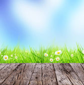 Spring background — Stock Photo