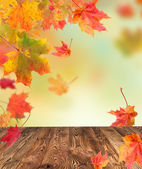 Autumn concept with wooden planks — Stock Photo