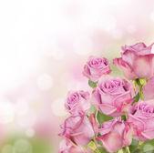 Roze rozen — Stockfoto