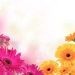 Flower bouquet — Stock Photo #22919064