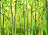 Bamboo forest — Stockfoto