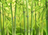 Floresta de bambu — Foto Stock