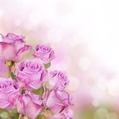 Roses — 图库照片