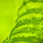 Fern plant — Stock Photo #25591443
