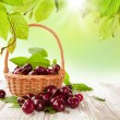 Fresh cherries — Stock Photo #29039371